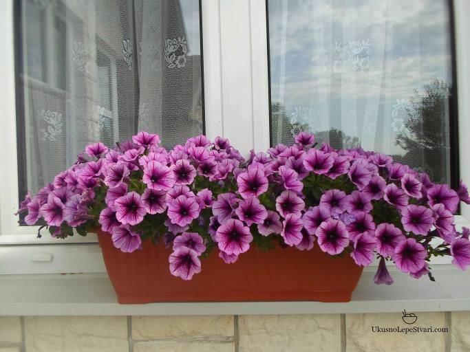 neko-cveve2
